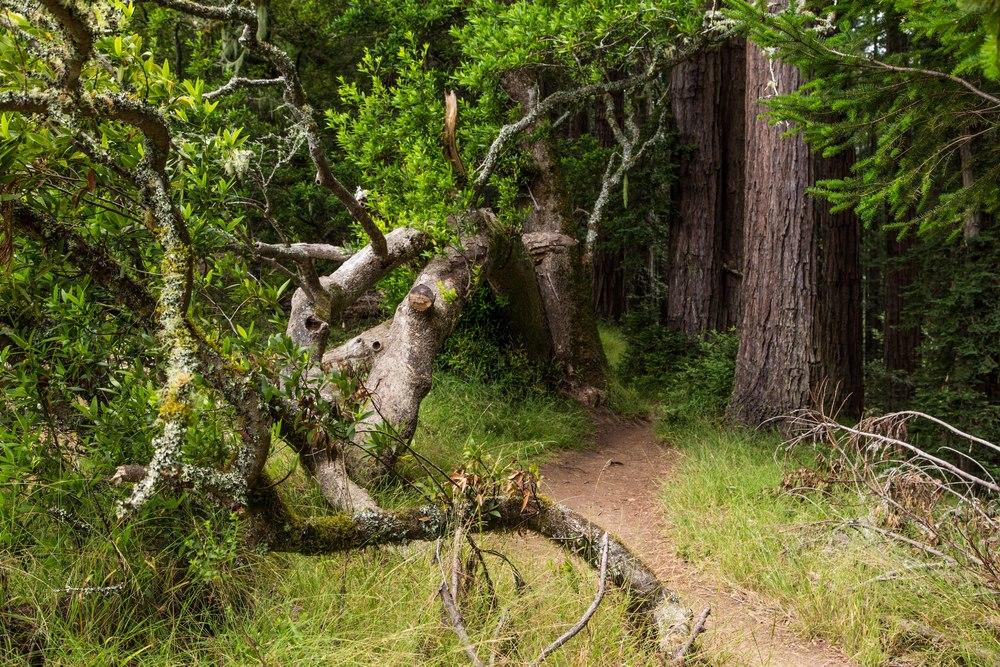 Dipsea Trail_-113.jpg