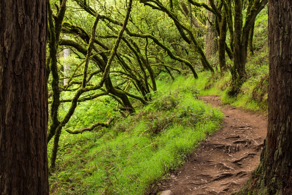 Dipsea Trail_-116.jpg
