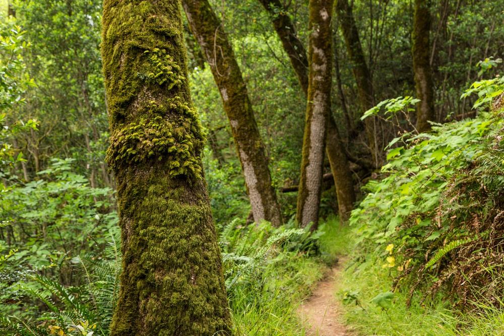Dipsea Trail_-131.jpg