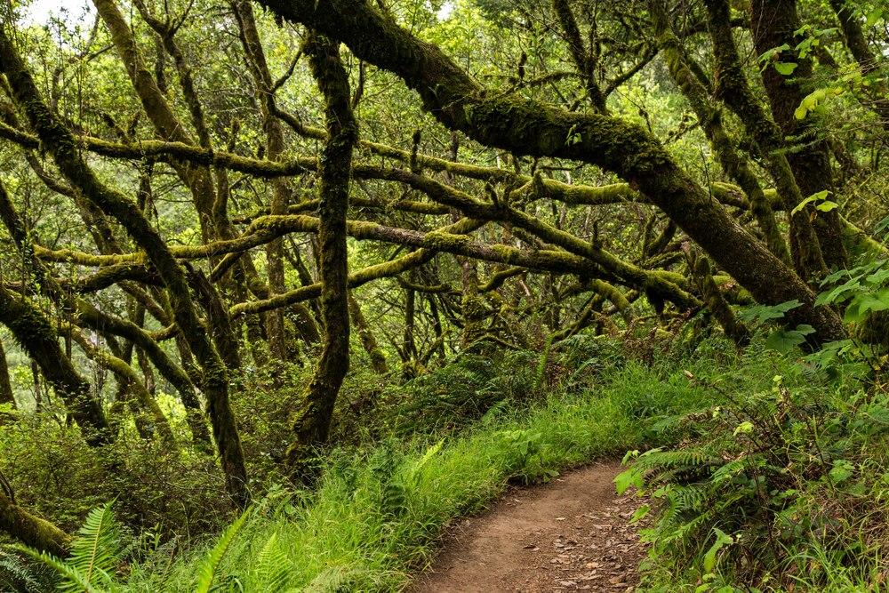 Dipsea Trail_-126.jpg