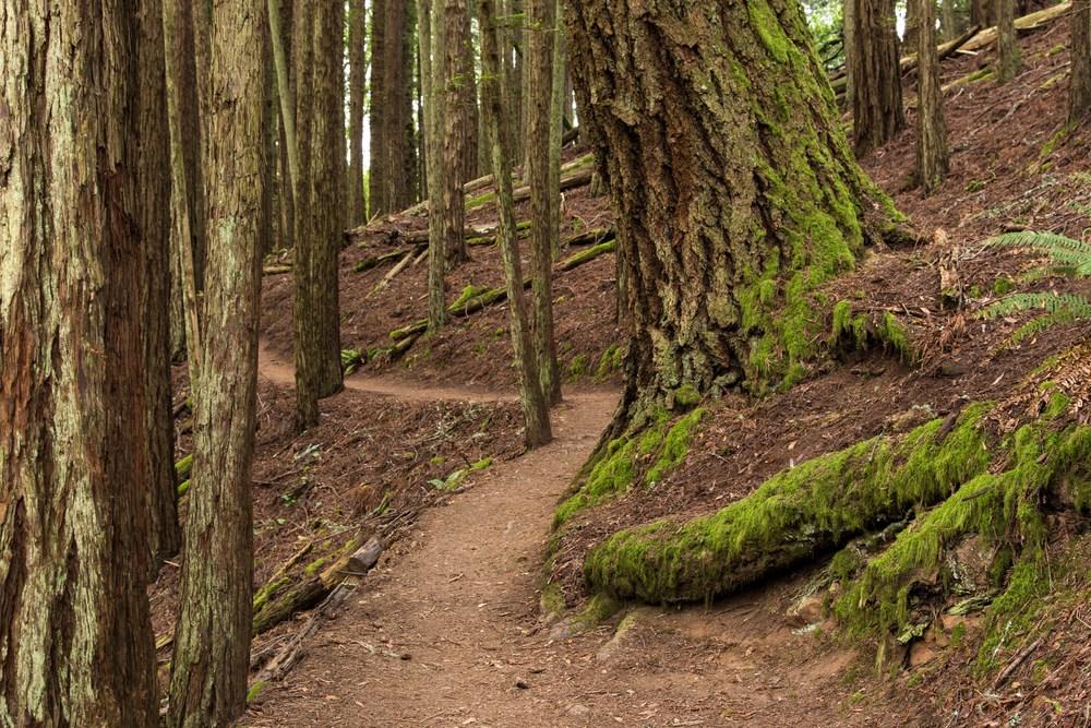 Dipsea Trail_-141.jpg
