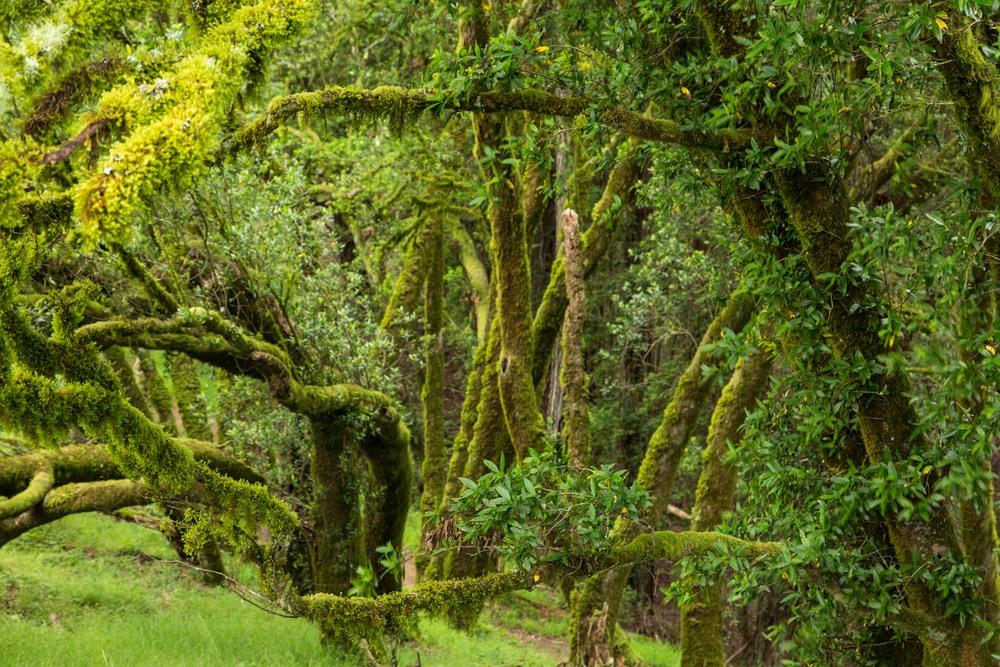Dipsea Trail_-152.jpg