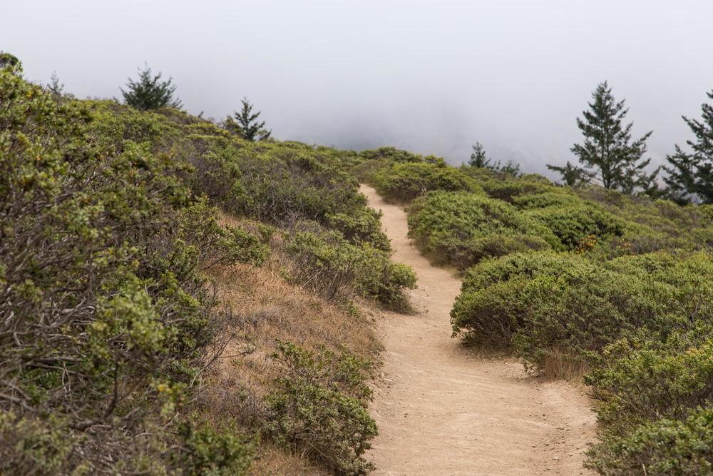 Dipsea Trail_-162.jpg