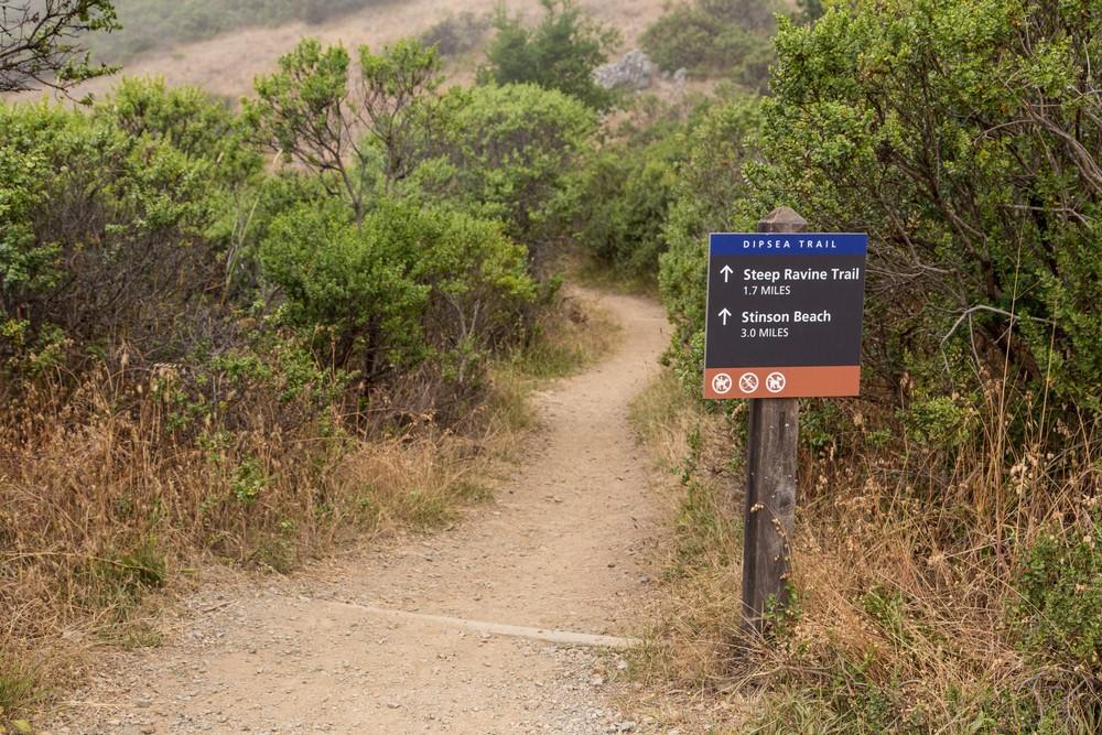 Dipsea Trail_-180.jpg