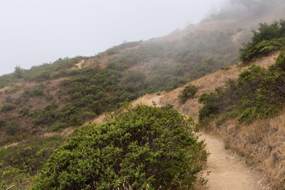 Dipsea Trail_-181.jpg