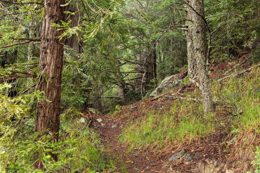 Dipsea Trail_-184.jpg