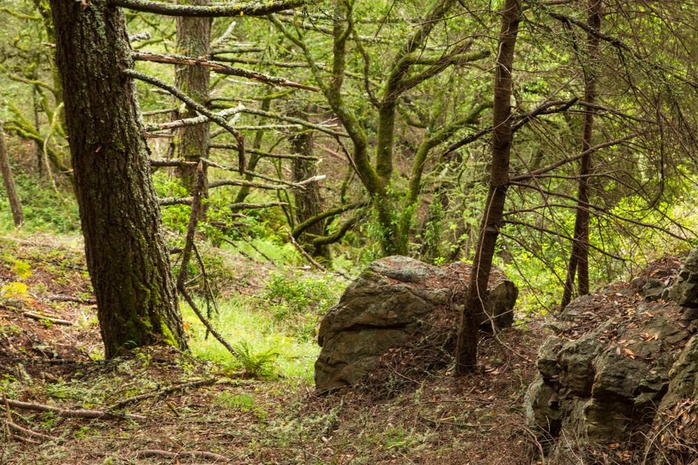 Dipsea Trail_-192.jpg
