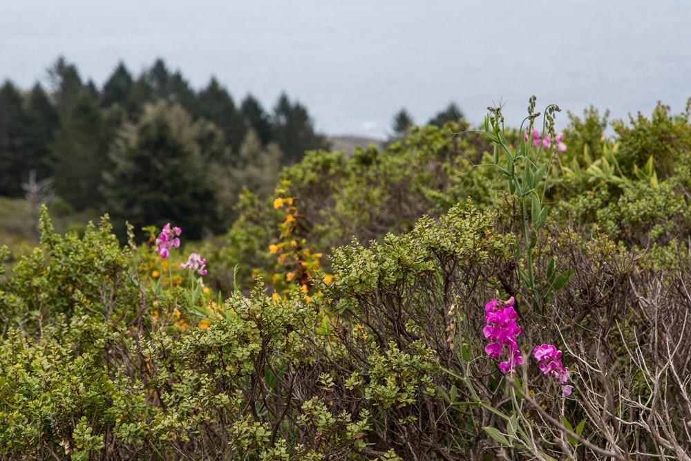 Dipsea Trail_-201.jpg