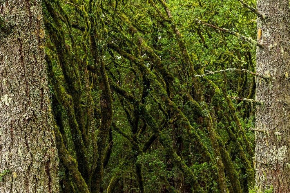 Dipsea Trail_-216.jpg