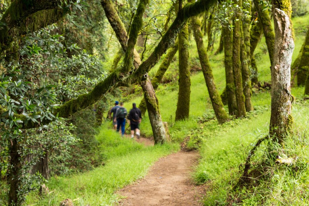 Dipsea Trail_-222.jpg