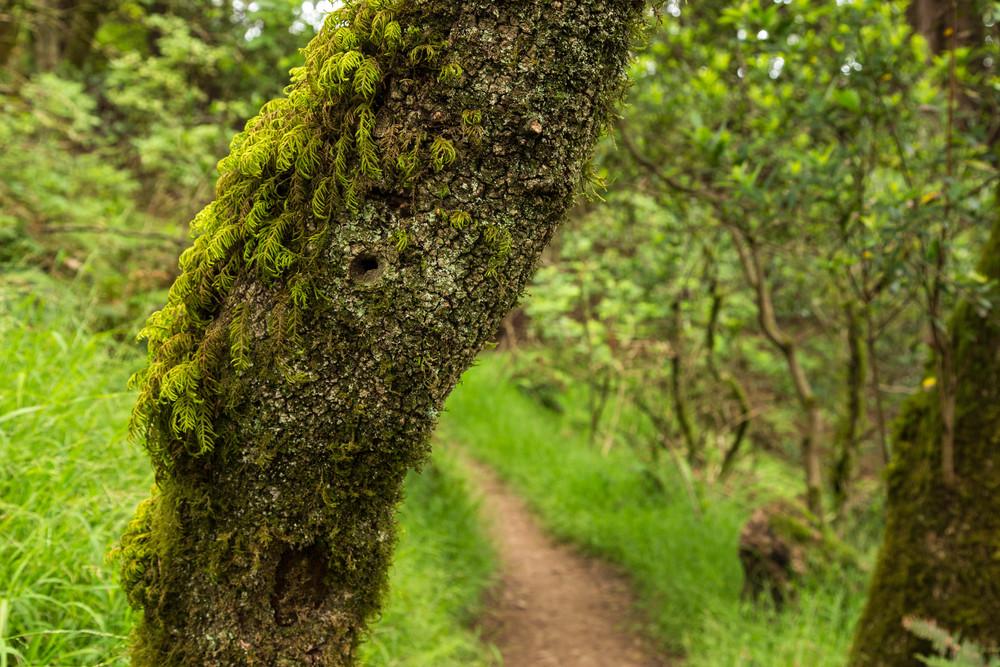 Dipsea Trail_-234.jpg