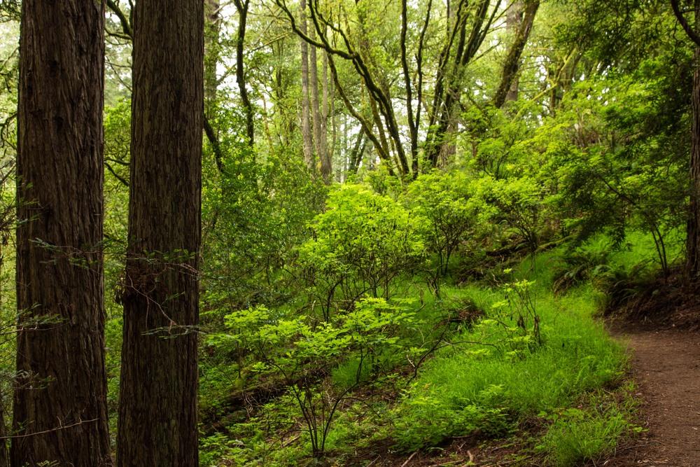Dipsea Trail_-240.jpg