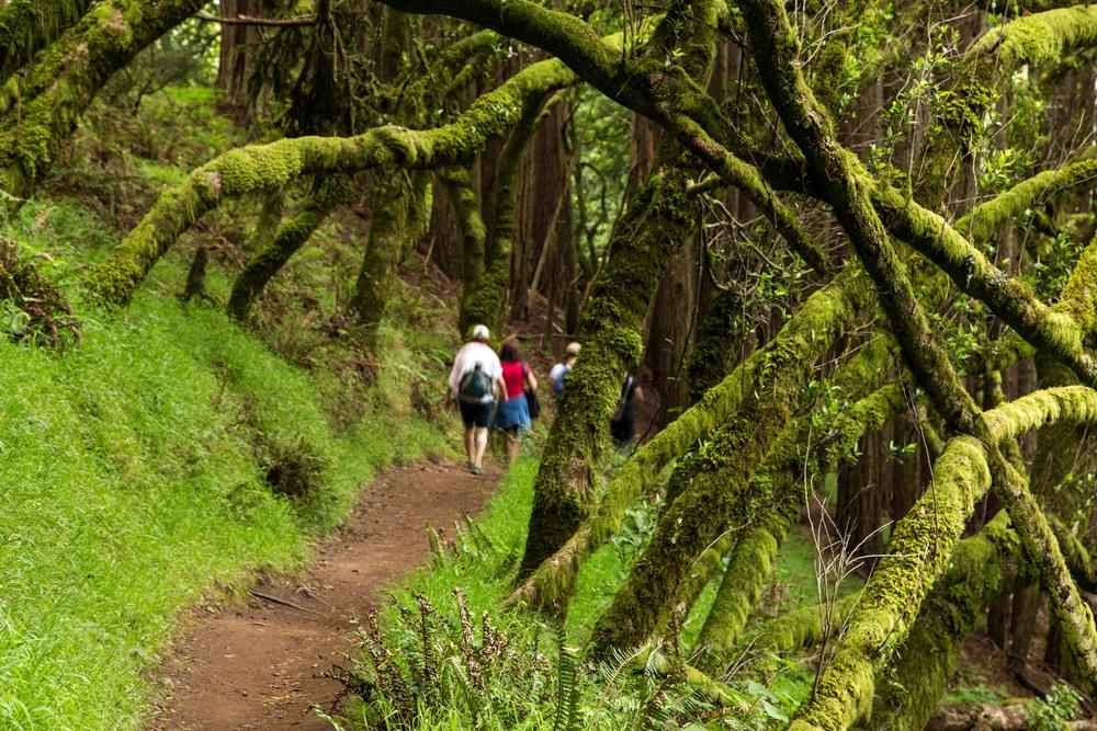 Dipsea Trail_-268.jpg