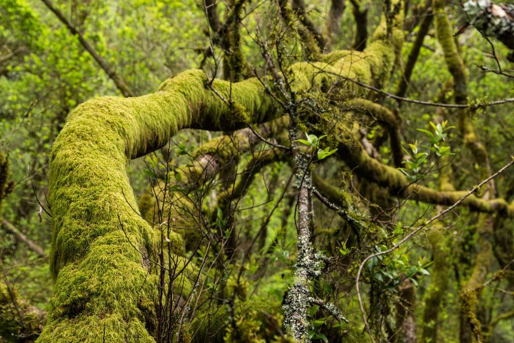 Dipsea Trail_-255.jpg