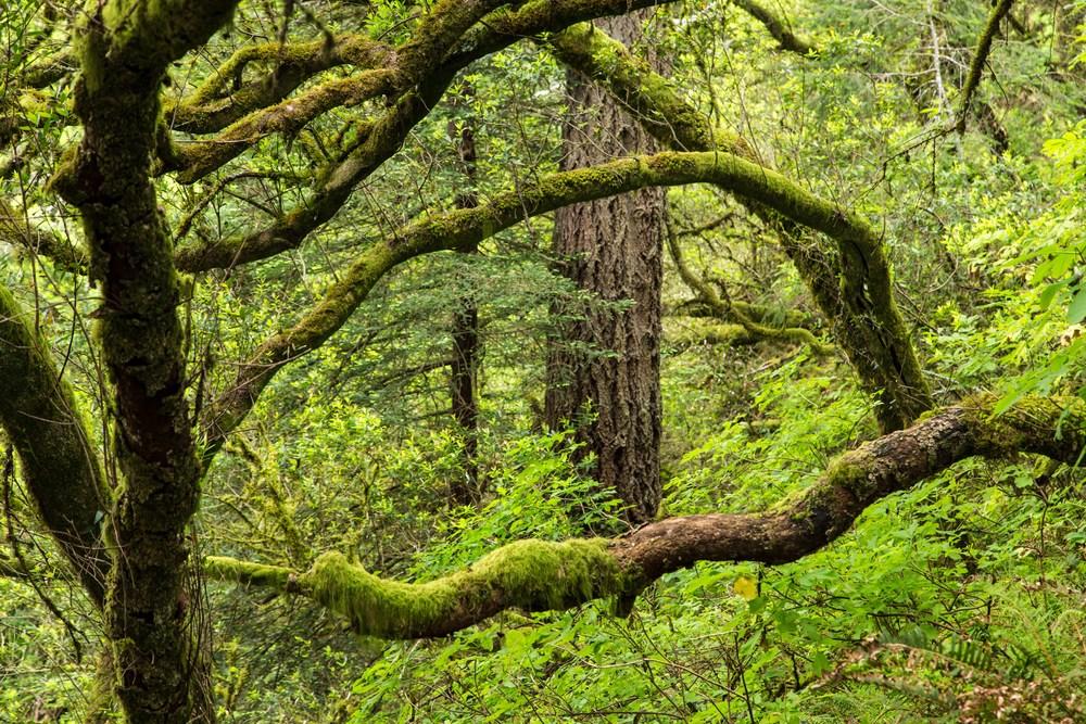 Dipsea Trail_-275.jpg