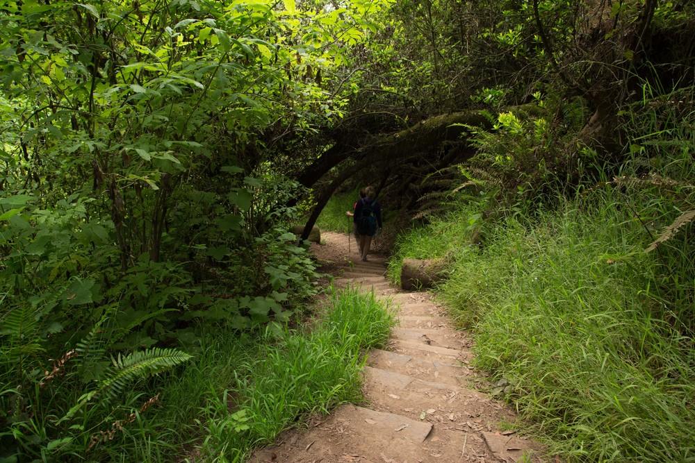 Dipsea Trail_-297.jpg
