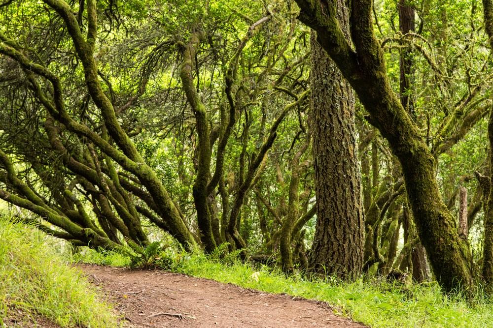 Dipsea Trail_-290.jpg