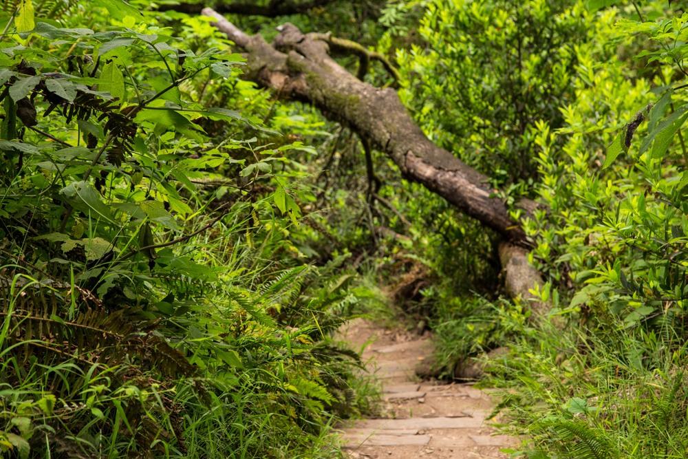 Dipsea Trail_-304.jpg