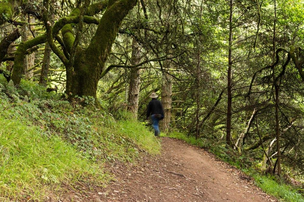 Dipsea Trail_-293.jpg