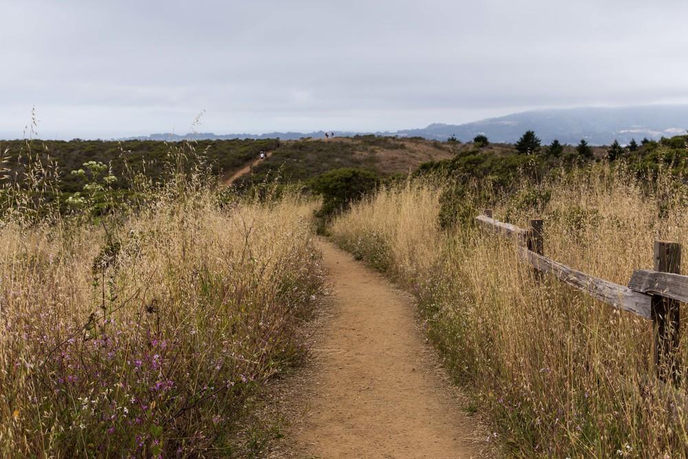 Dipsea Trail_-324.jpg