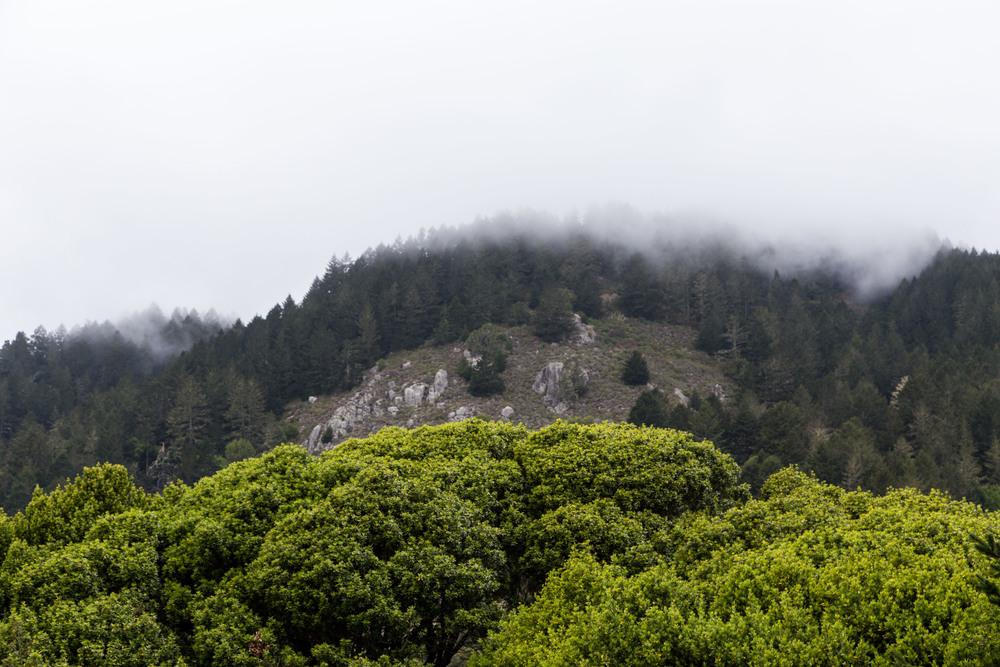 Dipsea Trail_-344.jpg