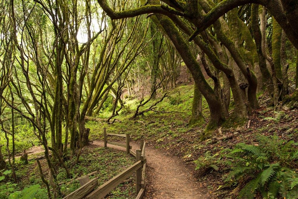 Dipsea Trail_-345.jpg
