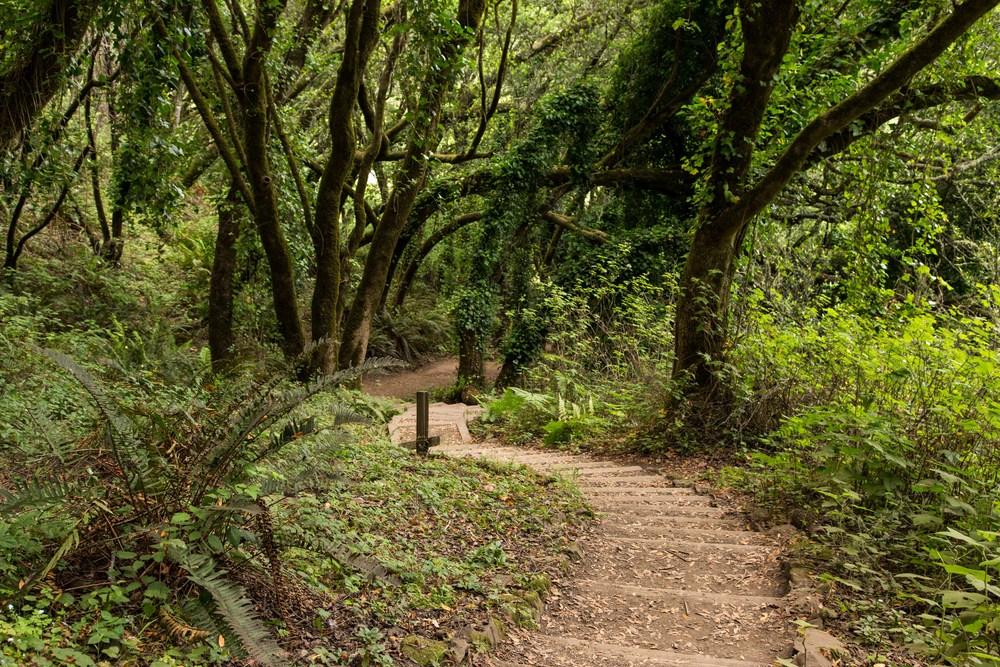 Dipsea Trail_-346.jpg
