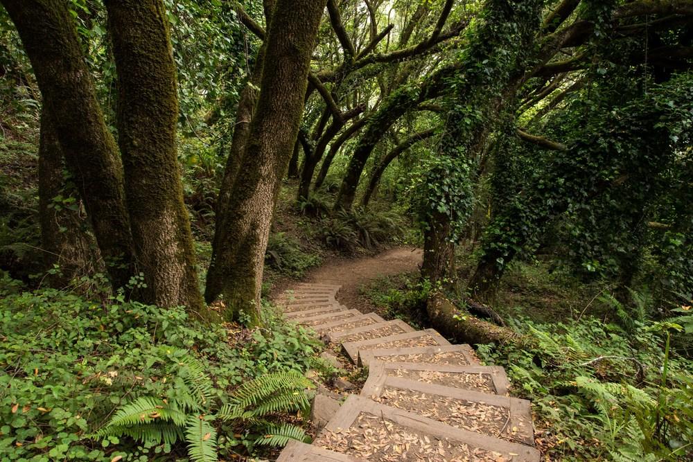 Dipsea Trail_-349.jpg