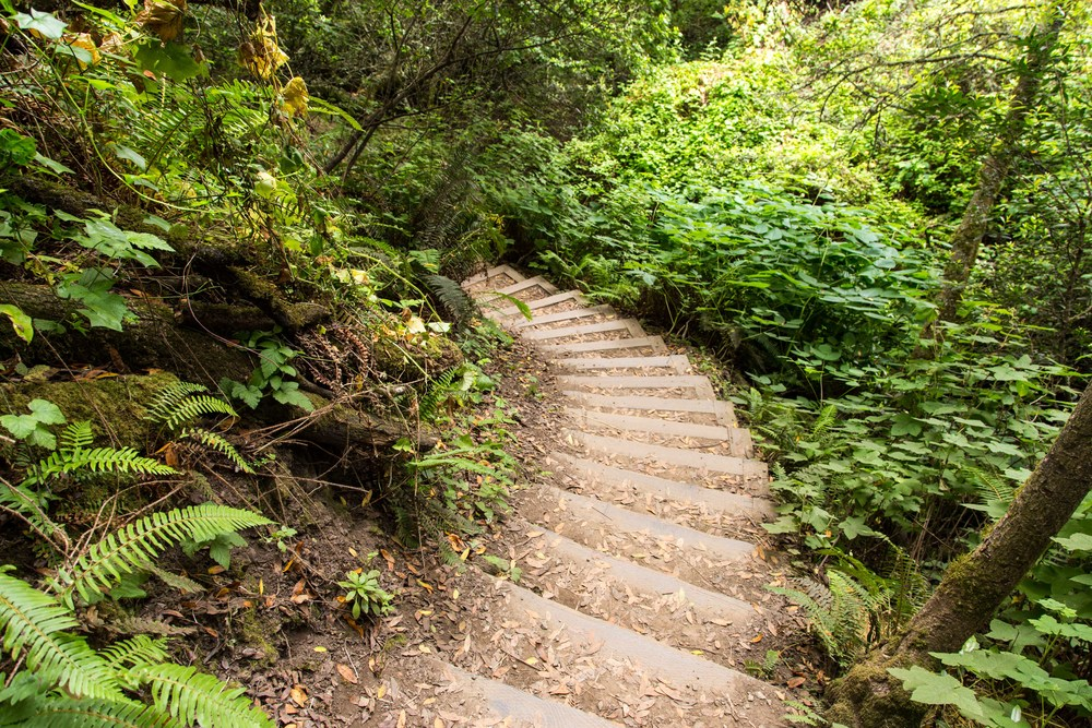 Dipsea Trail_-355.jpg
