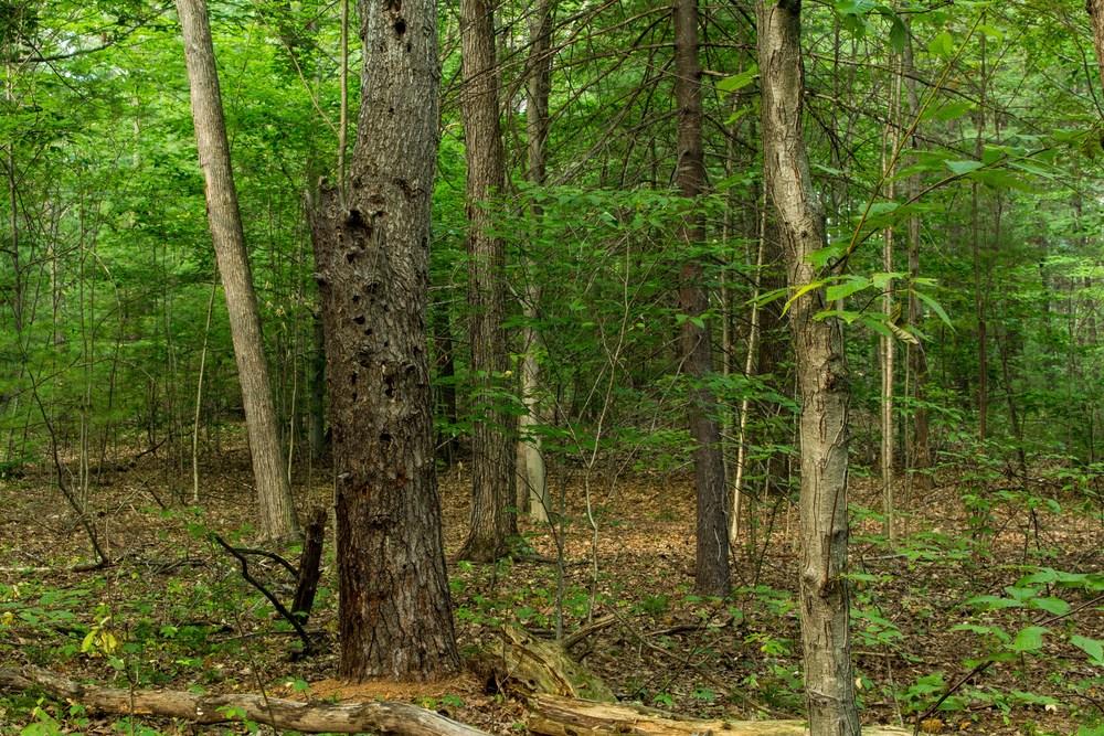 Clifton Park New York Trails-31.jpg