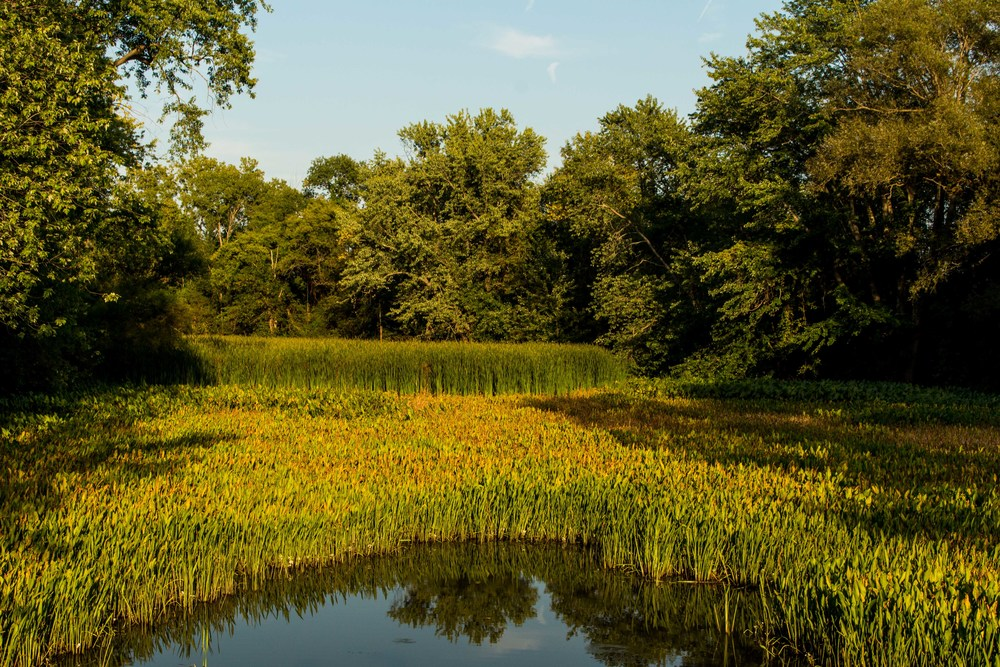 Clifton Park New York Trails-3.jpg