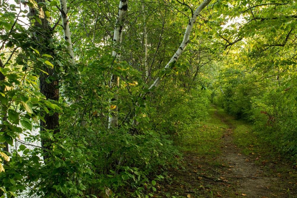 Clifton Park New York Trails-8.jpg
