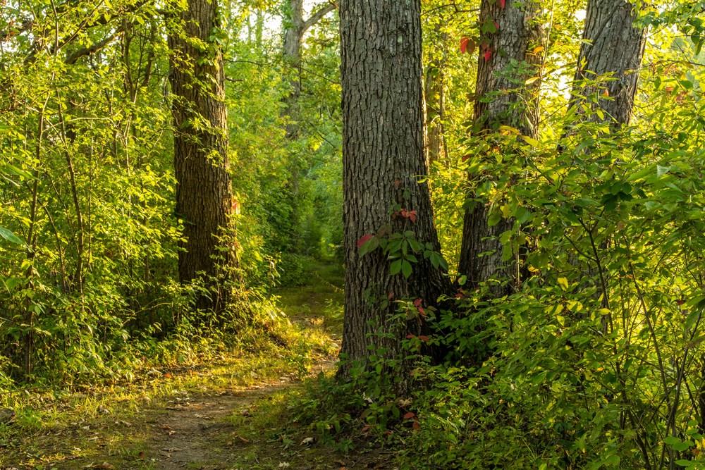 Clifton Park New York Trails-11.jpg