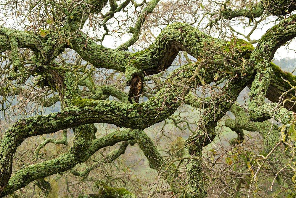 Blue Oak Trail  10.jpg