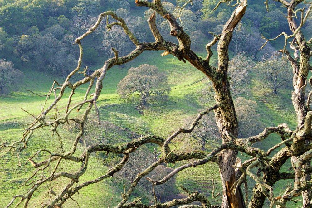 Blue Oak Trail  104.jpg