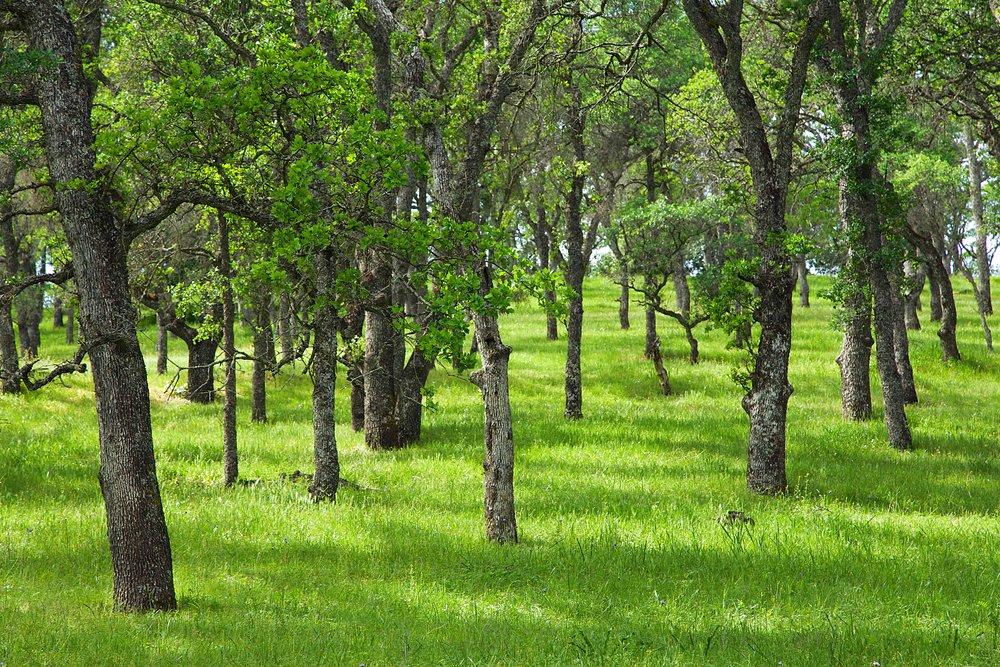 Marsh Creek 8 Mt. Diablo State Park 38.jpg
