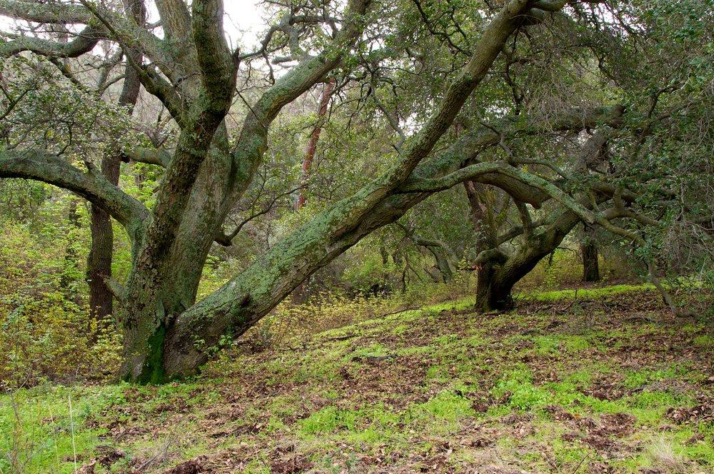 Mt. Diablo Hike 2_12_2011 - 2011-02-21 at 10-36-26.jpg