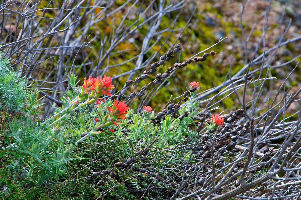 Mt. Diablo Hike 2_12_2011 - 2011-02-21 at 11-02-21.jpg