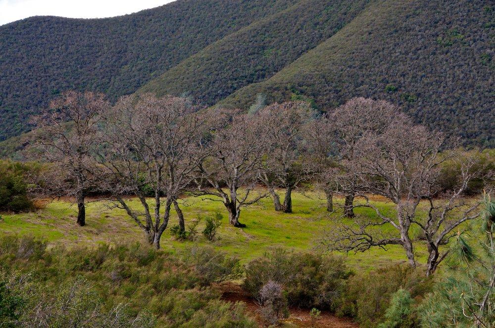 Mt. Diablo Hike 2_12_2011 - 2011-02-21 at 11-06-32.jpg