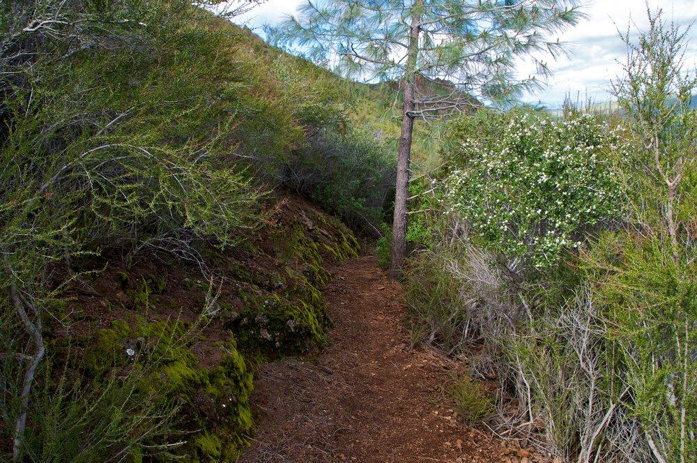 Mt. Diablo Hike 2_12_2011 - 2011-02-21 at 12-27-44.jpg