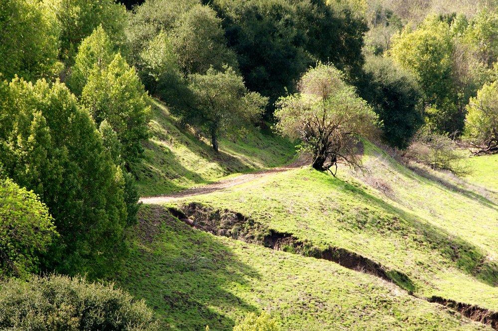 Briones Mott Peak 3_5_11 (53).jpg
