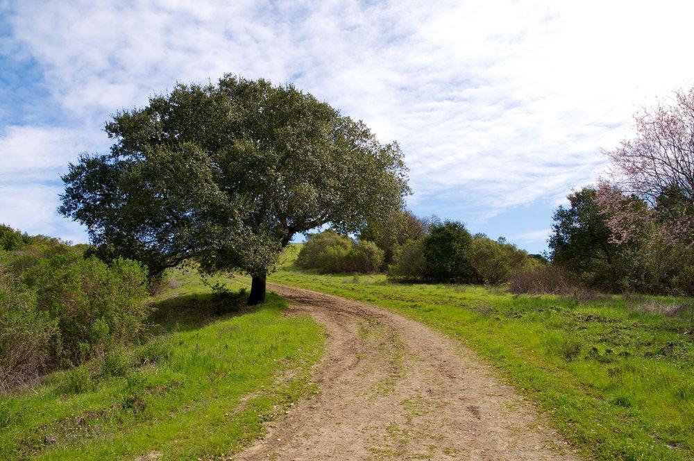 Rim trail 3_5_11 (76).jpg