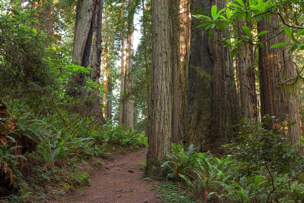 Redwood National Park-5.jpg