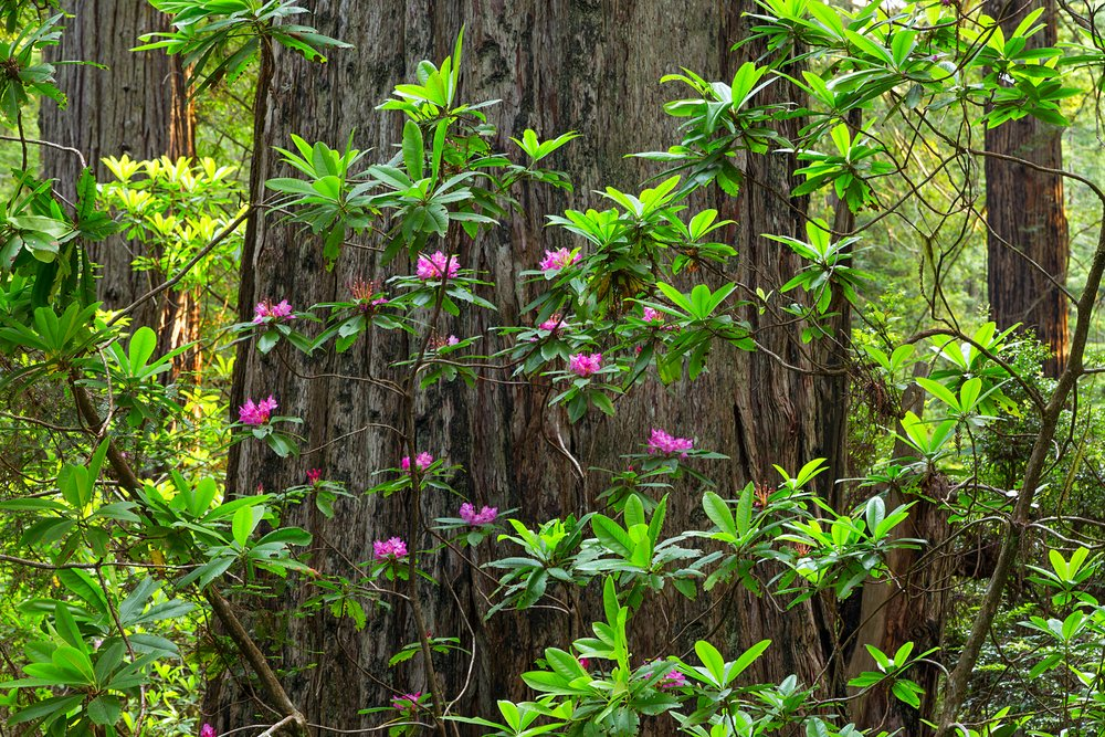 Redwood National Park-10.jpg