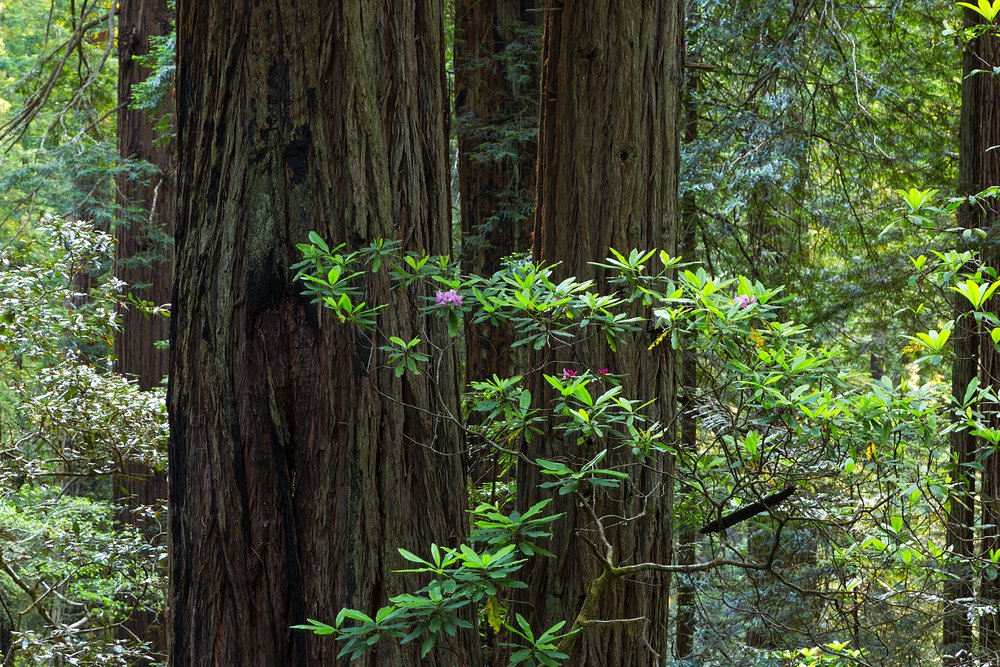 Redwood National Park-14.jpg