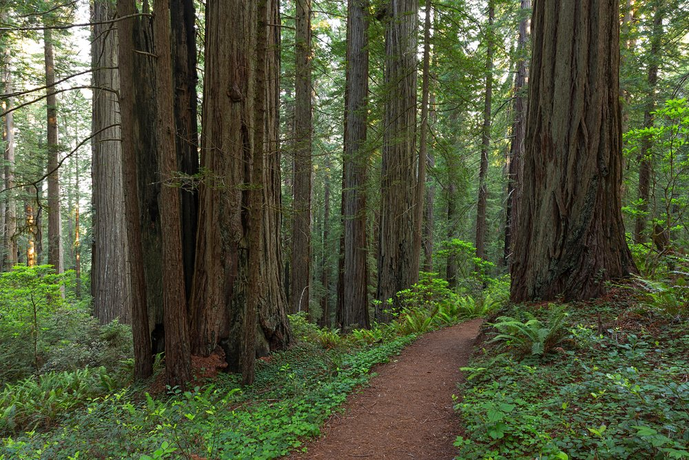Redwood National Park-23.jpg