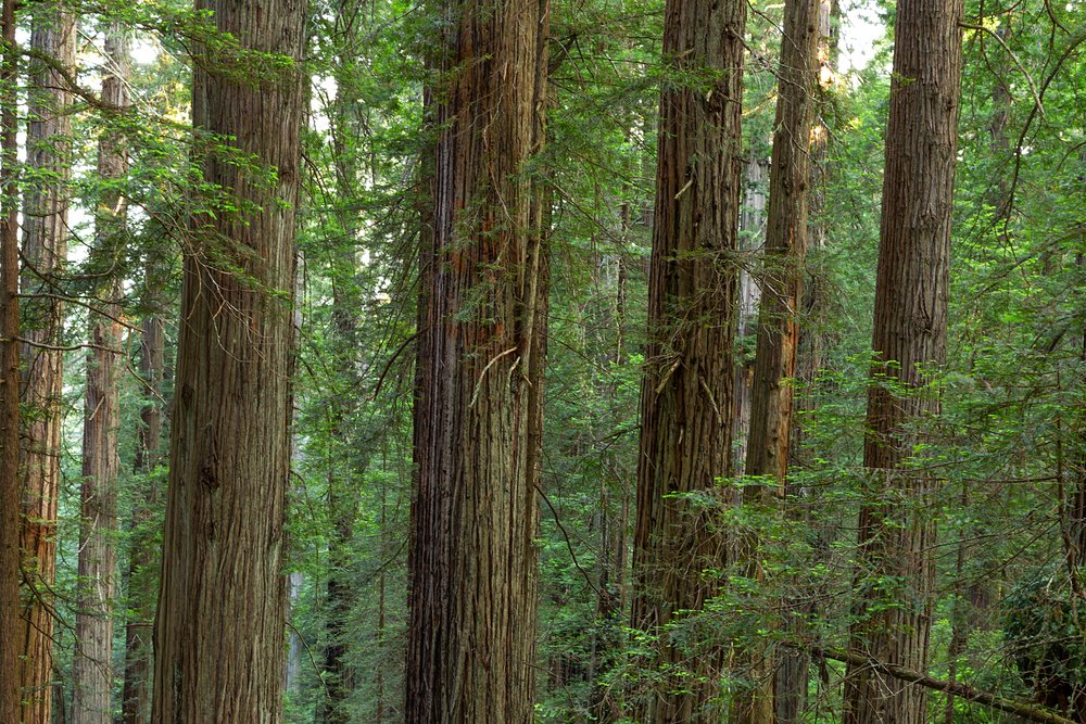 Redwood National Park-26.jpg