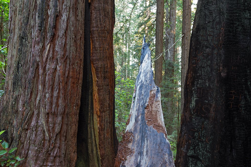 Redwood National Park-35.jpg