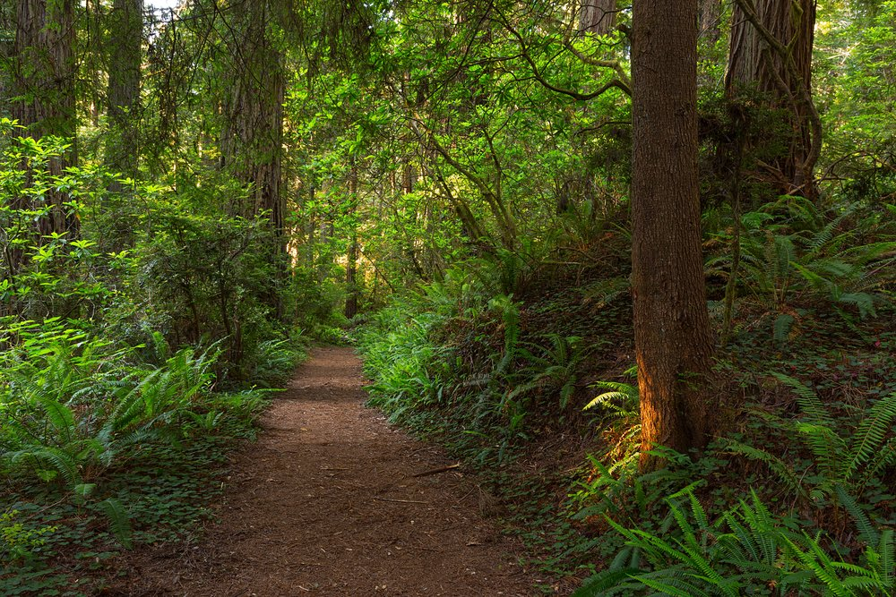 Redwood National Park-38.jpg