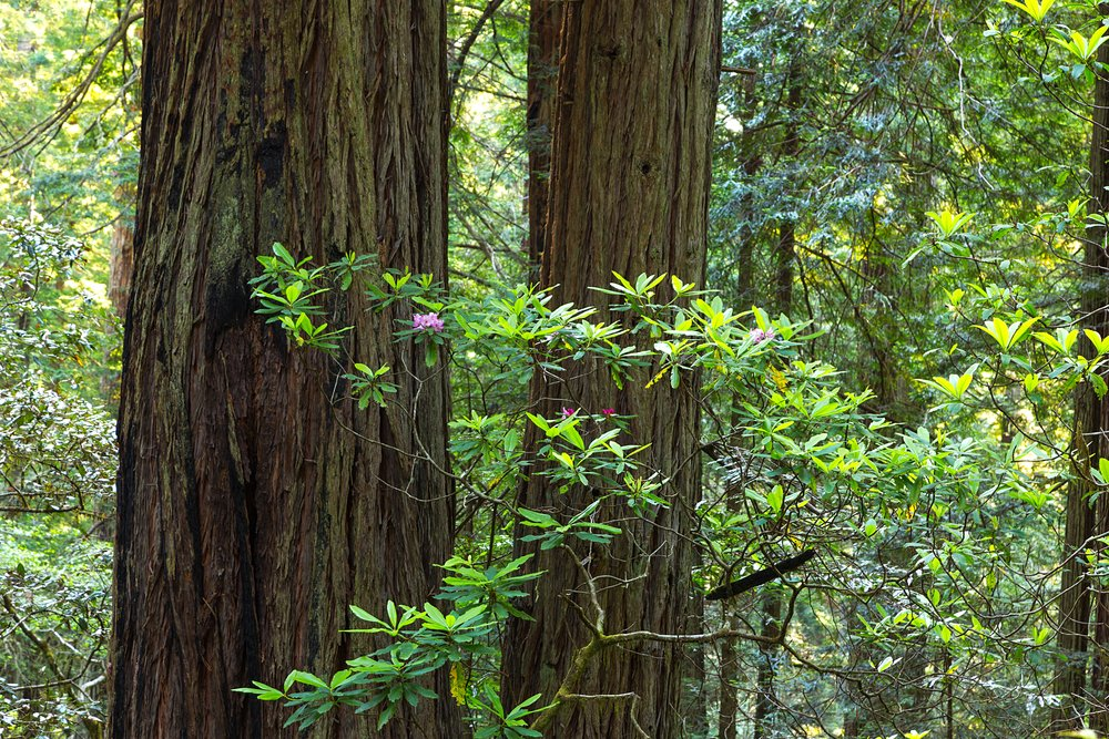 Redwood National Park-41.jpg